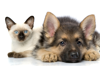 pictures-of-dogs-and-cats_1404149288
